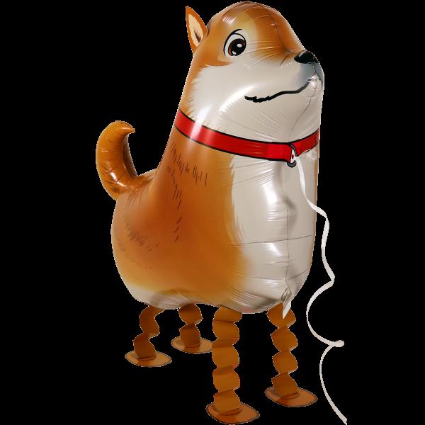 Laufender Ballon - Airwalker Ballon - ChihuahuaHund