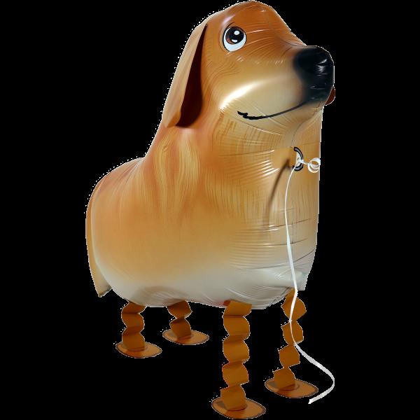 Laufender Ballon - Airwalker Ballon - Golden Retriever Hund